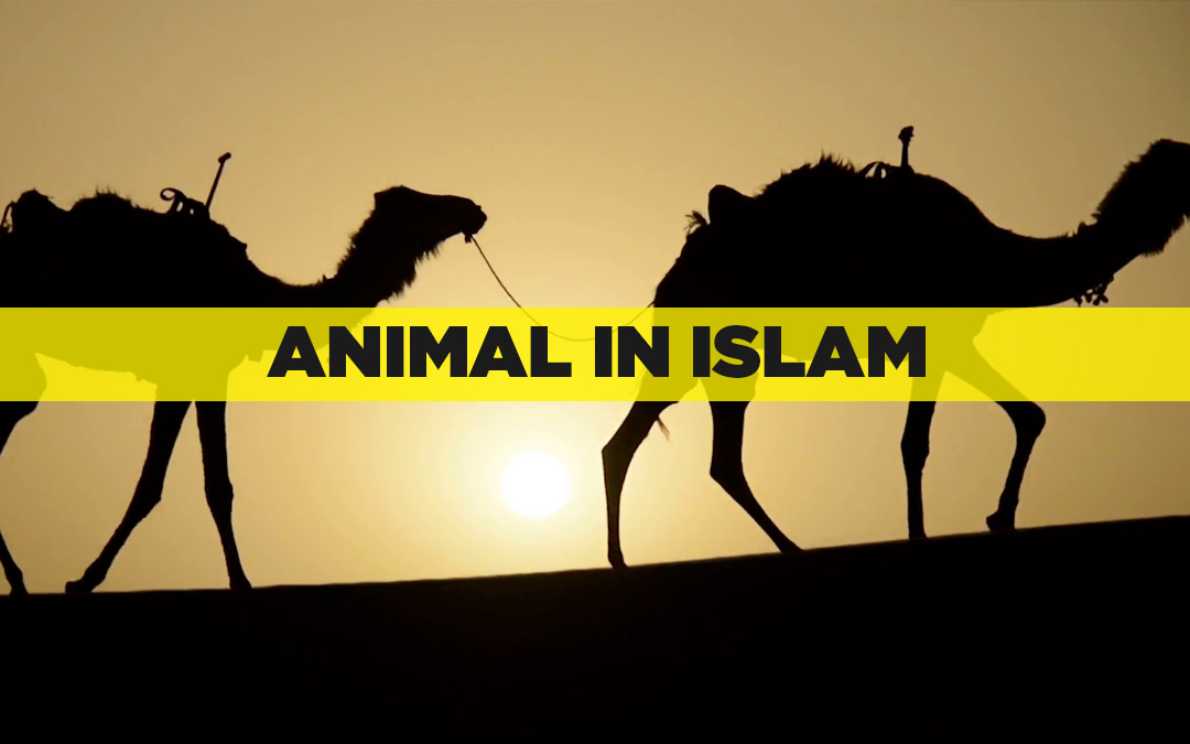 Animals in Islam