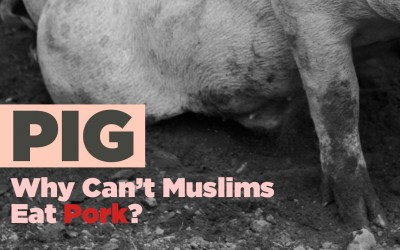 PIG – Why Can't Muslims Eat Pork?