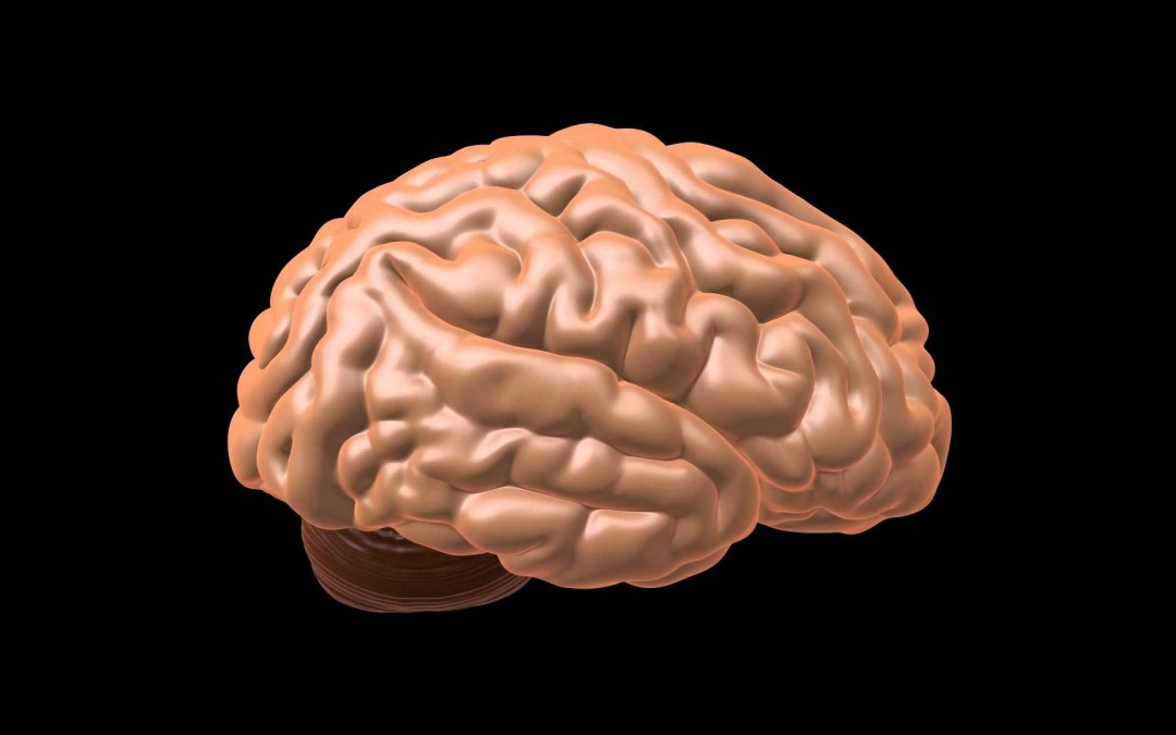 The Quran on the Cerebrum